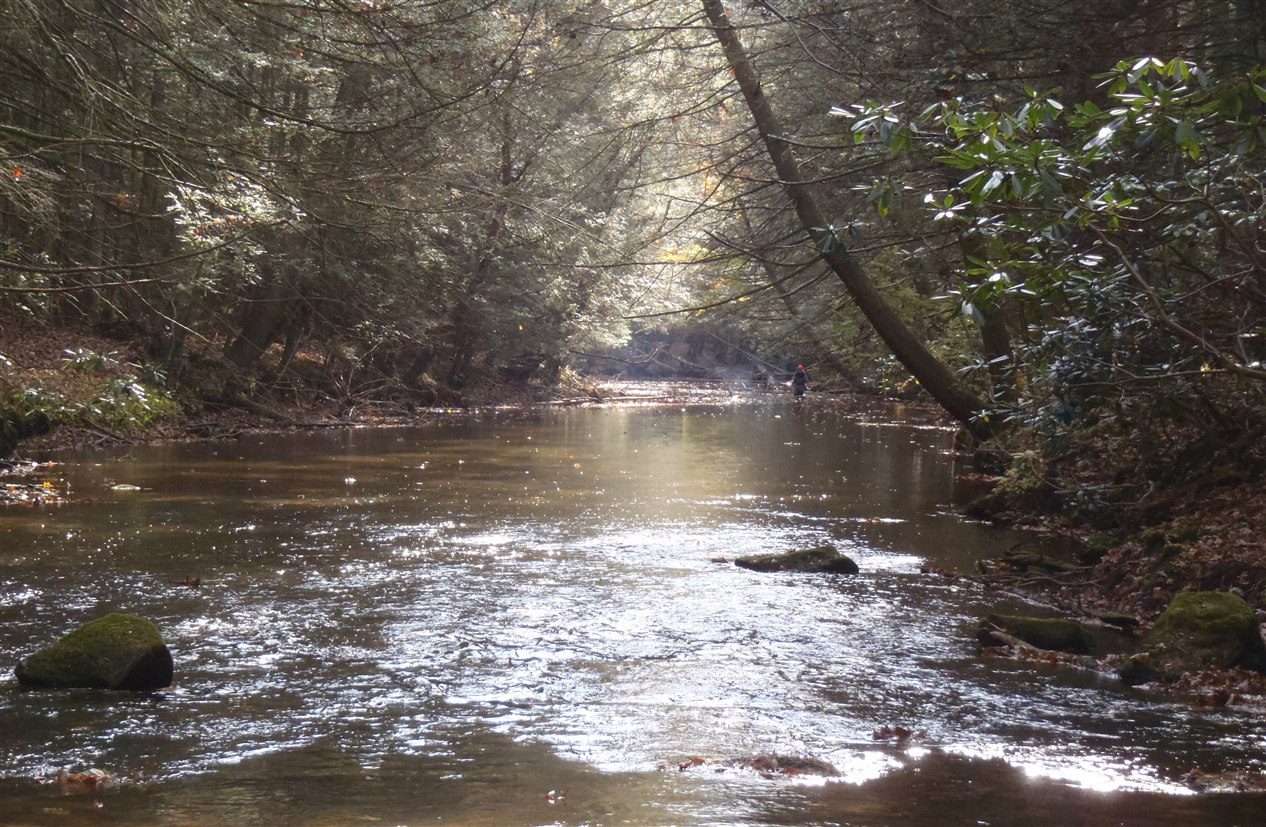 Clarks Creek « Doc Fritchey Trout Unlimited
