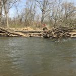 Benefits of Large Woody Debris in Streams