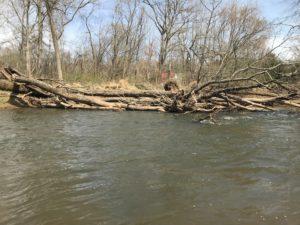 Benefits of Large Woody Debris in Streams