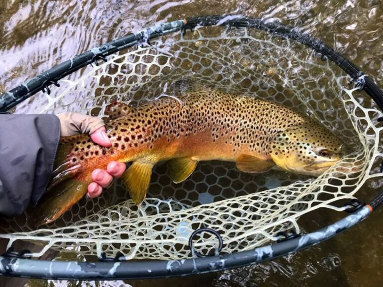 Petitioning to Protect and Manage Brown Trout in PA